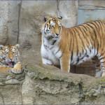 2013-04_Leipziger Zoo_06