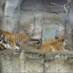 2013-04_Leipziger Zoo_07