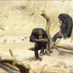 2013-04_Leipziger Zoo_08