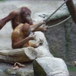 2013-04_Leipziger Zoo_09