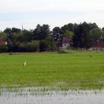 2011-09_ruhlsdorf-lottschesee_01