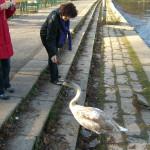 2011-11_sternwanderung neu-helgoland_07