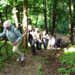 2008-05_werder-rundweg_12