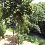 2008-06_werbellinsee_11