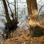 2009-04_waldsieversdorf-buckow_08
