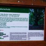 1608_eichhorst-silkebuche_ik_05