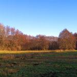 1612_hoppegarten-kaulsdorf_04